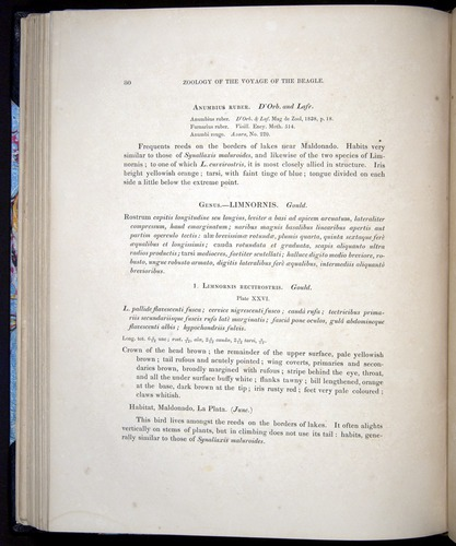 Image of Darwin-F8.2-1838-00080