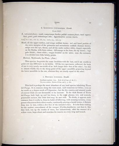 Image of Darwin-F8.2-1838-00081