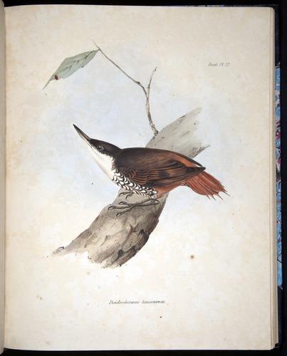 Image of Darwin-F8.2-1838-00082-f27