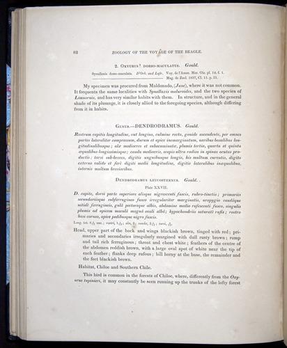 Image of Darwin-F8.2-1838-00082