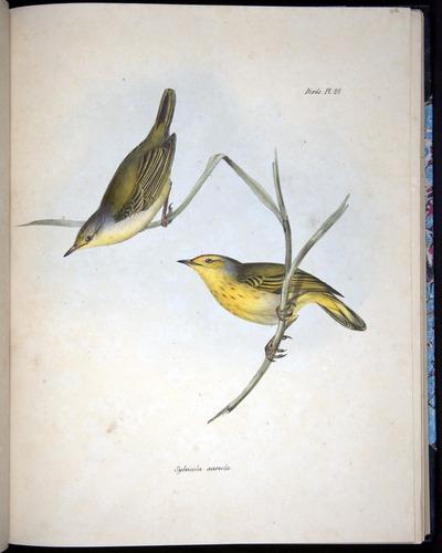 Image of Darwin-F8.2-1838-00086-f28