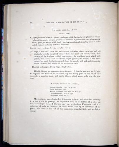 Image of Darwin-F8.2-1838-00086
