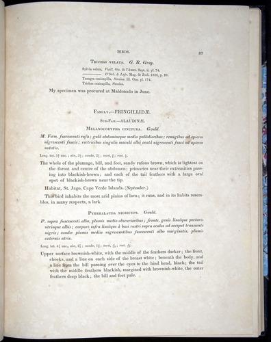 Image of Darwin-F8.2-1838-00087