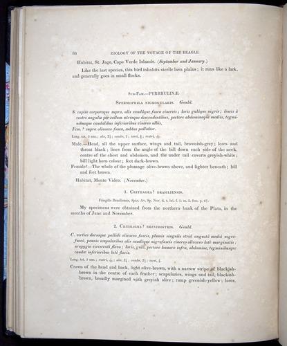 Image of Darwin-F8.2-1838-00088
