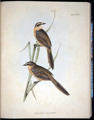 Image of Darwin-F8.2-1838-00090-af29