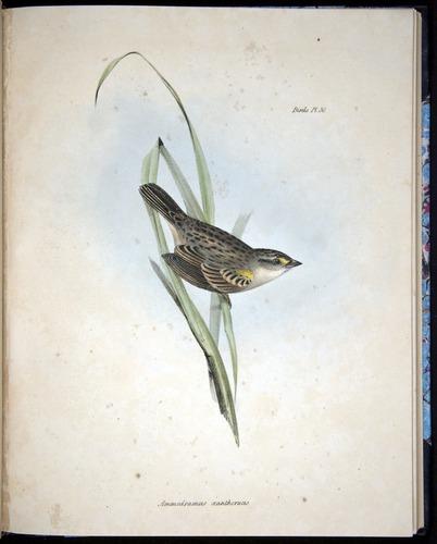Image of Darwin-F8.2-1838-00090-bf30