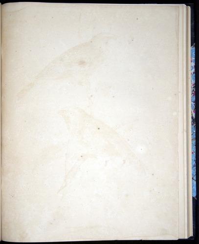 Image of Darwin-F8.2-1838-00090-dyf32