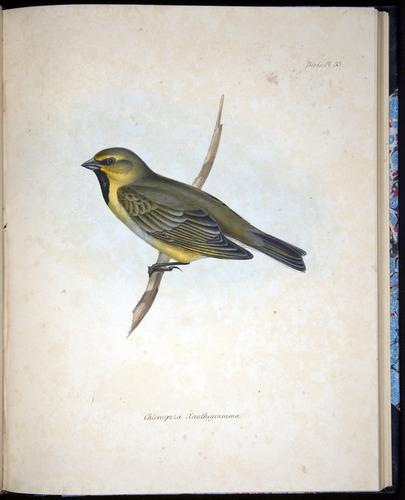 Image of Darwin-F8.2-1838-00092-f33