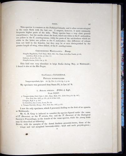 Image of Darwin-F8.2-1838-00097