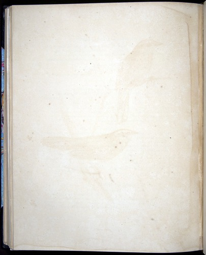 Image of Darwin-F8.2-1838-00098-bf35