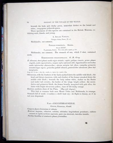 Image of Darwin-F8.2-1838-00098