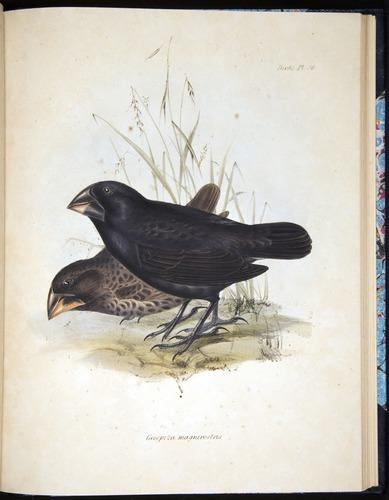 Image of Darwin-F8.2-1838-00100-af36