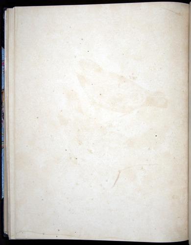 Image of Darwin-F8.2-1838-00100-bbf37