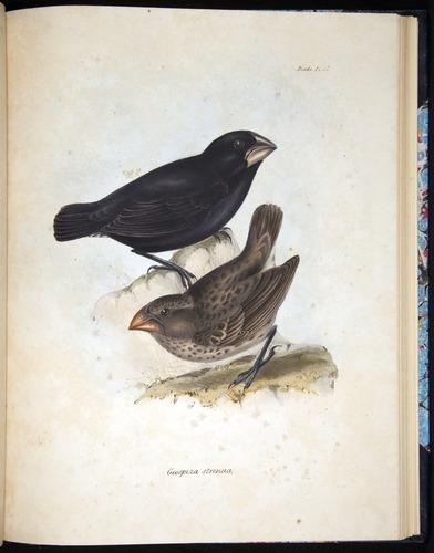 Image of Darwin-F8.2-1838-00100-bf37