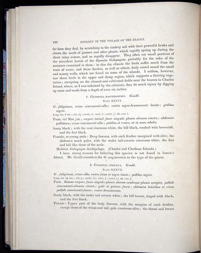 Image of Darwin-F8.2-1838-00100