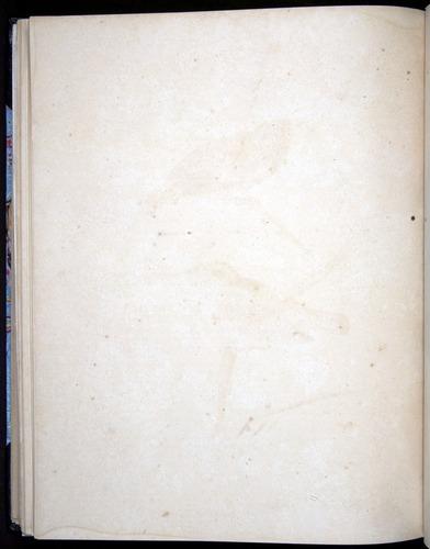 Image of Darwin-F8.2-1838-00102-abf39
