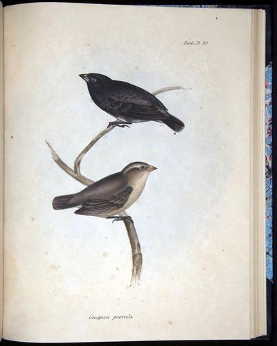 Image of Darwin-F8.2-1838-00102-af39