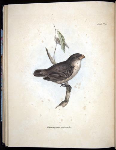 Image of Darwin-F8.2-1838-00102-bf40