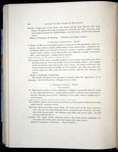Image of Darwin-F8.2-1838-00102