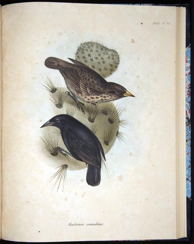 Image of Darwin-F8.2-1838-00104-af42