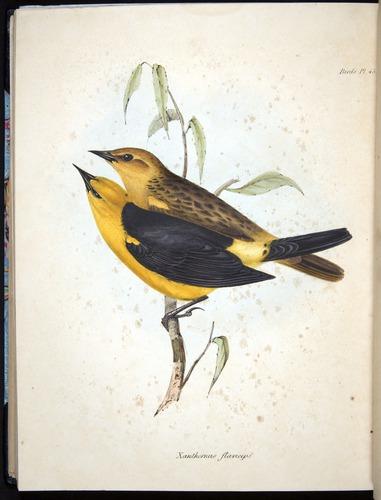Image of Darwin-F8.2-1838-00106-bf45