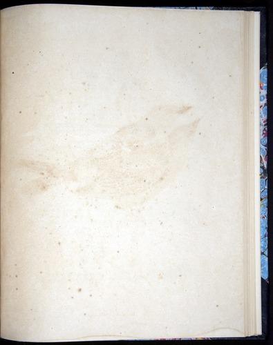 Image of Darwin-F8.2-1838-00106-byf45