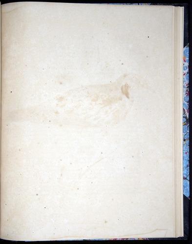 Image of Darwin-F8.2-1838-00114-yf46