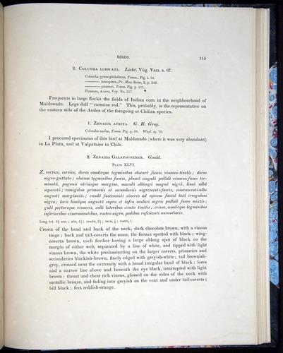 Image of Darwin-F8.2-1838-00115