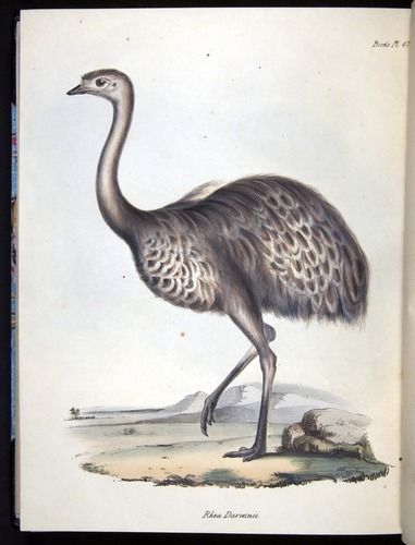Image of Darwin-F8.2-1838-00122-f47