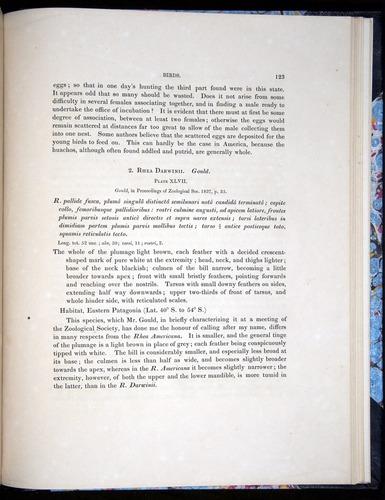 Image of Darwin-F8.2-1838-00123