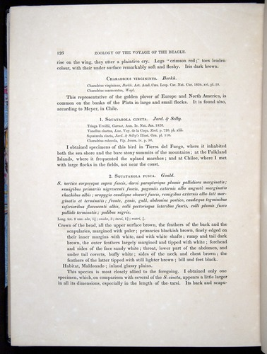 Image of Darwin-F8.2-1838-00126