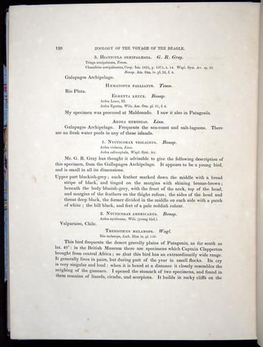 Image of Darwin-F8.2-1838-00128