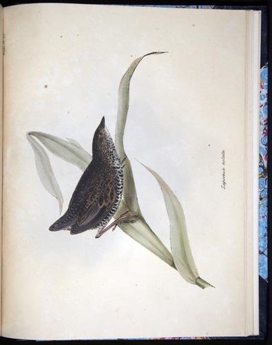 Image of Darwin-F8.2-1838-00132-af48