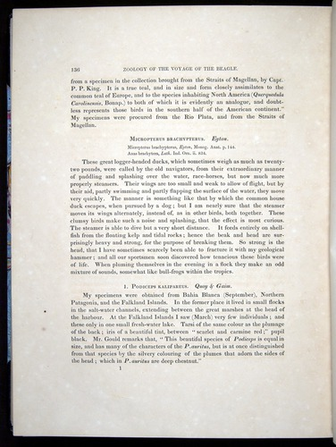 Image of Darwin-F8.2-1838-00136