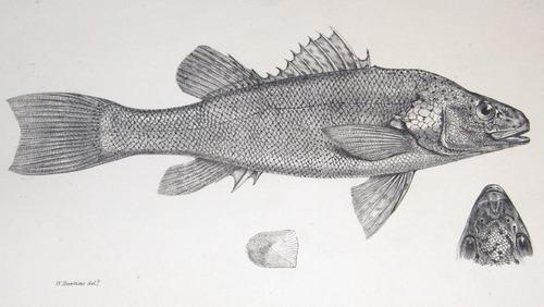 Image of Darwin-F8.3-1838-zzzzzz-det-00000-z14-bf01