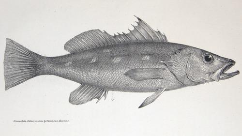 Image of Darwin-F8.3-1838-zzzzzz-det-00002-bf02