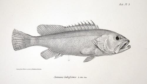 Image of Darwin-F8.3-1838-zzzzzz-det-00008-ayf03