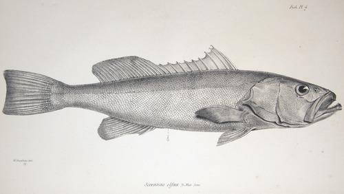 Image of Darwin-F8.3-1838-zzzzzz-det-00008-bbf04