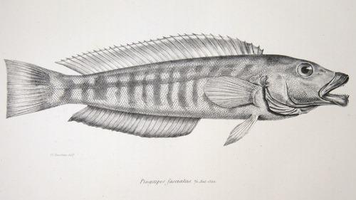 Image of Darwin-F8.3-1838-zzzzzz-det-00020-yf05