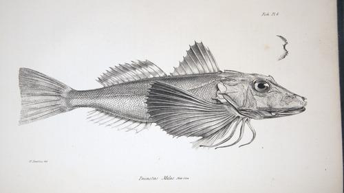 Image of Darwin-F8.3-1838-zzzzzz-det-00028-bf06