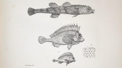 Image of Darwin-F8.3-1838-zzzzzz-det-00038-bf07