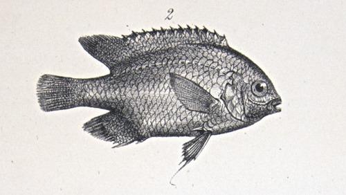 Image of Darwin-F8.3-1838-zzzzzz-det-00046-bf09-1