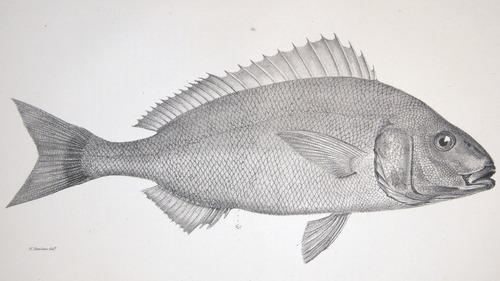 Image of Darwin-F8.3-1838-zzzzzz-det-00048-bf10