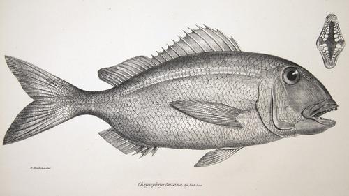 Image of Darwin-F8.3-1838-zzzzzz-det-00057-cf12