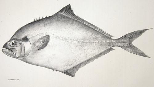 Image of Darwin-F8.3-1838-zzzzzz-det-00066-cf13