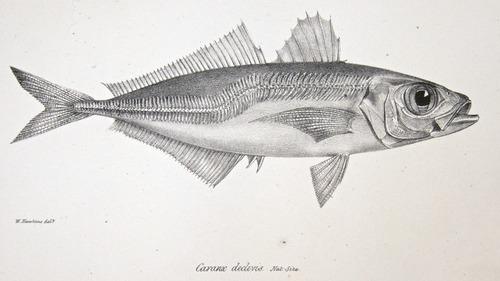 Image of Darwin-F8.3-1838-zzzzzz-det-00068-cf14