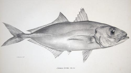 Image of Darwin-F8.3-1838-zzzzzz-det-00068-cf15