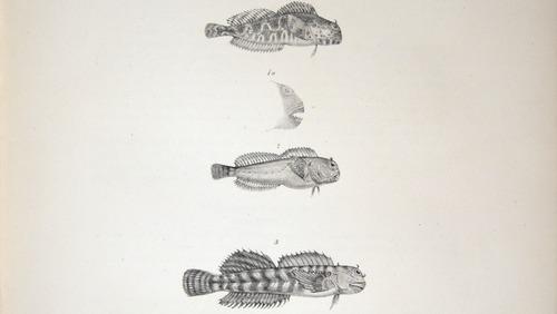 Image of Darwin-F8.3-1838-zzzzzz-det-00084-cf17