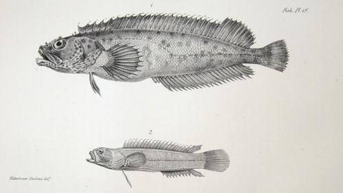 Image of Darwin-F8.3-1838-zzzzzz-det-00090-cf18