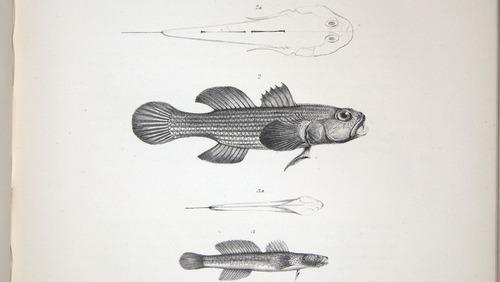 Image of Darwin-F8.3-1838-zzzzzz-det-00094-cf19
